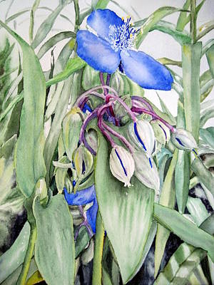 Spiderwort Triptych 2 Poster by Joann Perry
