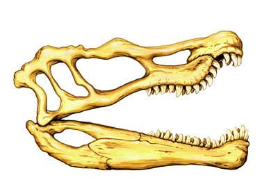 Spinosaurus Dinosaur Skull Poster by Deagostini/uig