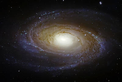 Spiral Galaxy M81 Poster by Jennifer Rondinelli Reilly - Fine Art Photography