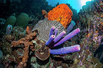 Sponges And Coral On A Reef Poster by Georgette Douwma