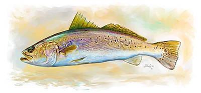 Spotted Trout Illustration Poster by Savlen Art