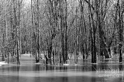 Spring Flooding Poster by Sophie Vigneault