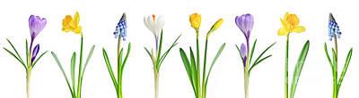 Spring Flowers  Poster by Elena Elisseeva