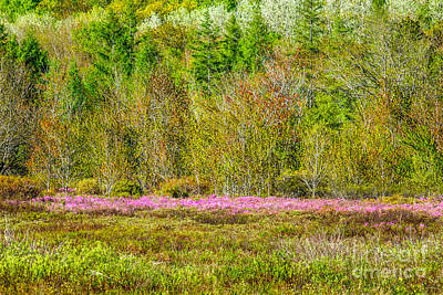 Spring In Acadia's Great Meadow Poster by Susan Cole Kelly