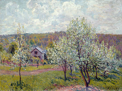 Spring In The Environs Of Paris, Apple Blossom Poster by Alfred Sisley