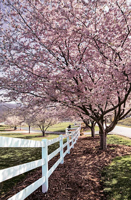 Spring Pink Poster by Debra and Dave Vanderlaan