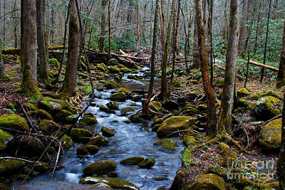 Spring Smoky Mountain Stream  Poster by Nancy Mueller