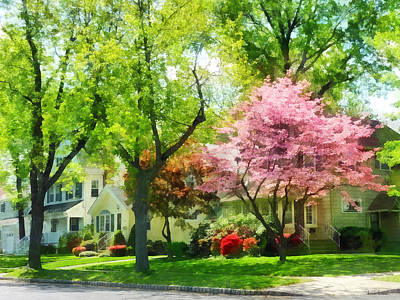 Spring - The Trees Are Flowering On My Street Poster by Susan Savad
