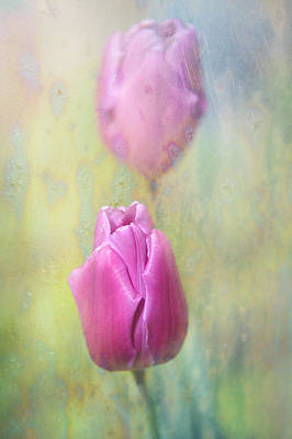 Spring Tulips Poster by Jenny Rainbow