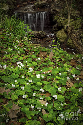 Spring Voilets Near Creek Poster by Elena Elisseeva