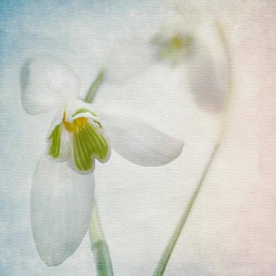 Springflower Poster by Annie Snel