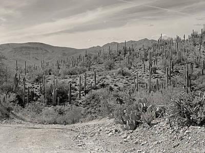 Saguaro Hills Poster by Gordon Beck