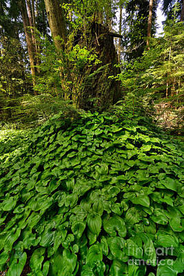 Stanley Park In Spring Time Poster by Terry Elniski