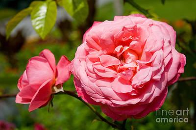 Stanley Park Rose Garden 2 Poster by Terry Elniski