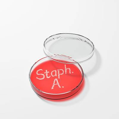 Staphylococcus Aureus In A Petri Dish Poster by David Parker