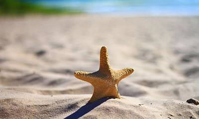 Starfish On The Beach Poster by Dan Sproul