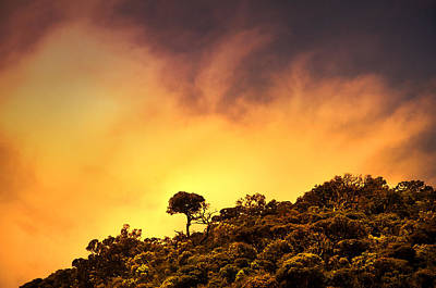 Staying Proud. Horton Plains. Sri Lanka Poster by Jenny Rainbow