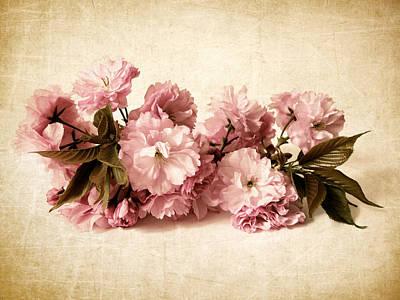 Still Life Blossom Poster by Jessica Jenney