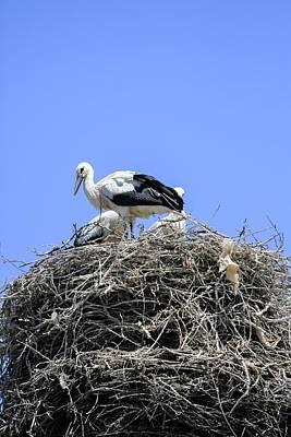 Storks Nesting Poster by Photostock-israel