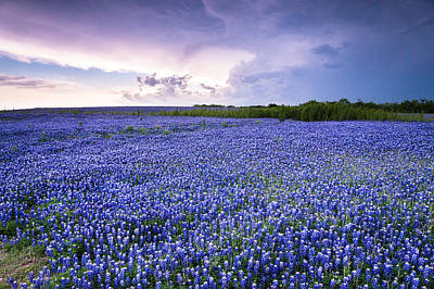 Storm Is Coming In Wildflower Field - Bluebonnet Poster by Ellie Teramoto