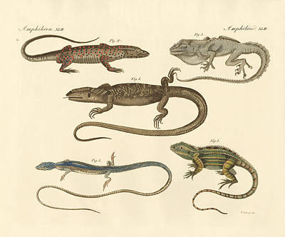 Strange Amphibians Poster by Splendid Art Prints