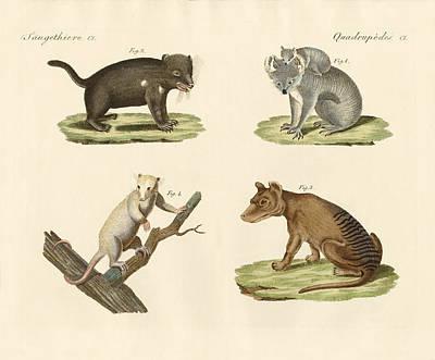 Strange Marsupials Poster by Splendid Art Prints