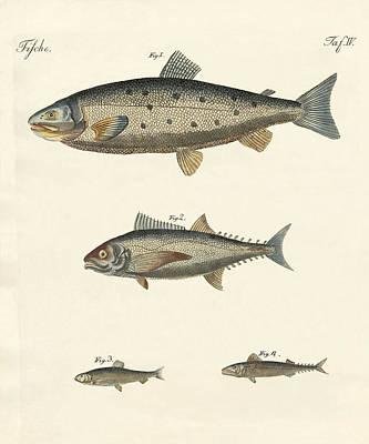 Strange Trading Fish Poster by Splendid Art Prints