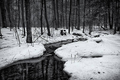 Stream Through The Misty Winter Woods Poster by Jeff Sinon