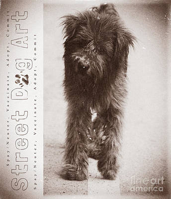 Street Dog Art #7 Poster by Nola Lee Kelsey
