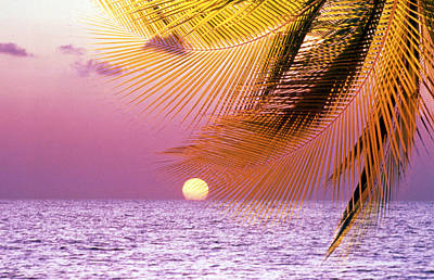 Stylized Tropical Scene With Violet Poster by Panoramic Images