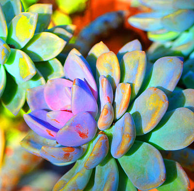 Succulent Color - Botanical Art By Sharon Cummings Poster by Sharon Cummings