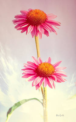 Summer Impressions Cone Flowers Poster by Bob Orsillo