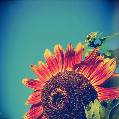 Summer Sunflower Poster by Joy StClaire