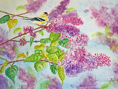 Summertime Arrival II - Goldfinch And Lilacs Poster by Kathryn Duncan