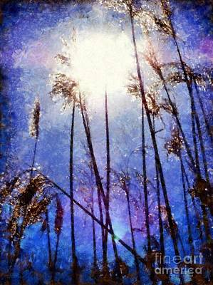 Sun Shine On The Marsh Grass Poster by Janine Riley