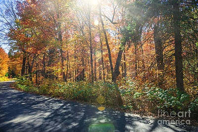 Sunflare In Fall Forest Poster by Elena Elisseeva