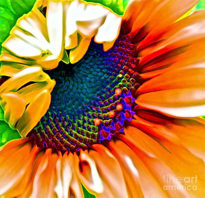 Sunflower Crazed Poster by Gwyn Newcombe