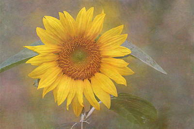 Sunflower Dream Poster by Angie Vogel