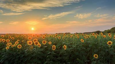 Sunflower Sundown Poster by Bill Wakeley