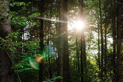 Sunlight Forest Poster by Pati Photography