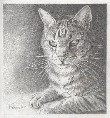 Sunlit Tabby Cat Poster by Victoria Lisi