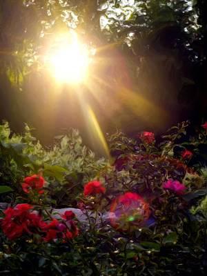 Sunny Garden Flowers Poster by Valoree Skiles