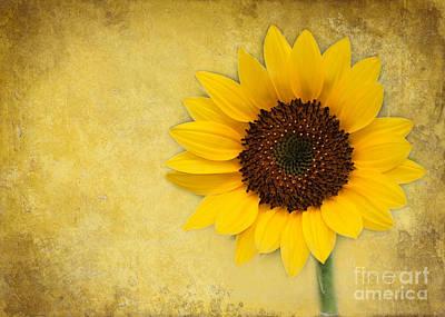Sunny Sunflower Poster by Sabrina L Ryan