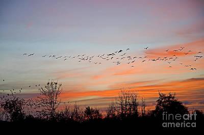 Sunset At Ankeny Wildlife Refuge Poster by Nick  Boren
