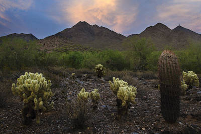 Sunset At Mcdowell Mountains In Scottsdale Az Usa Poster by Dave Dilli