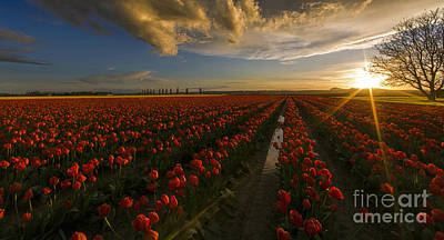 Sunset In The Skagit Valley Poster by Mike Reid