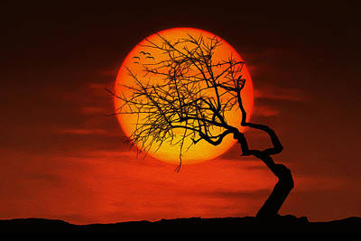 Sunset Tree Poster by Bess Hamiti