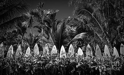Surf Board Fence Maui Hawaii Black And White Poster by Edward Fielding