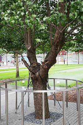 Survivor Tree Poster by Jim West