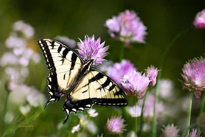 Swallowtail Butterfly Dream Poster by Christina Rollo